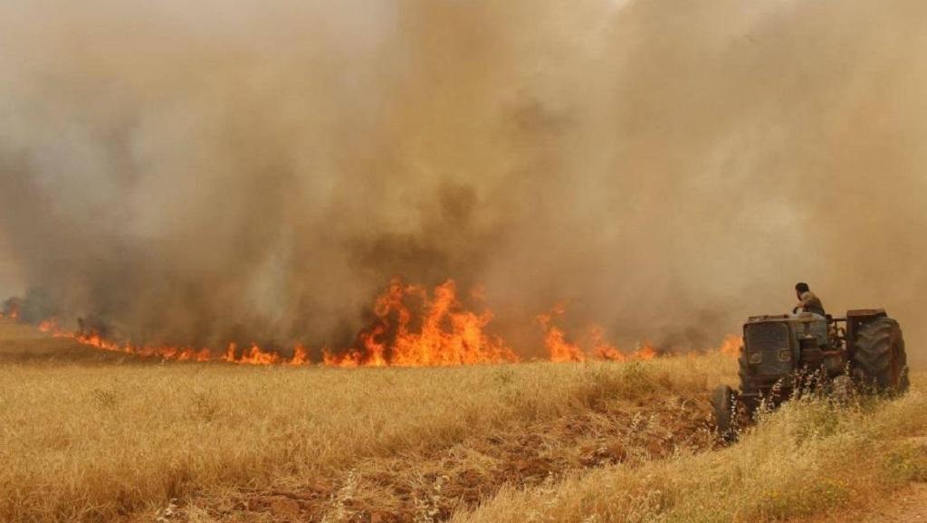 المستفيد من حرق القمح السوري! – شبكة جيرون الإعلامية